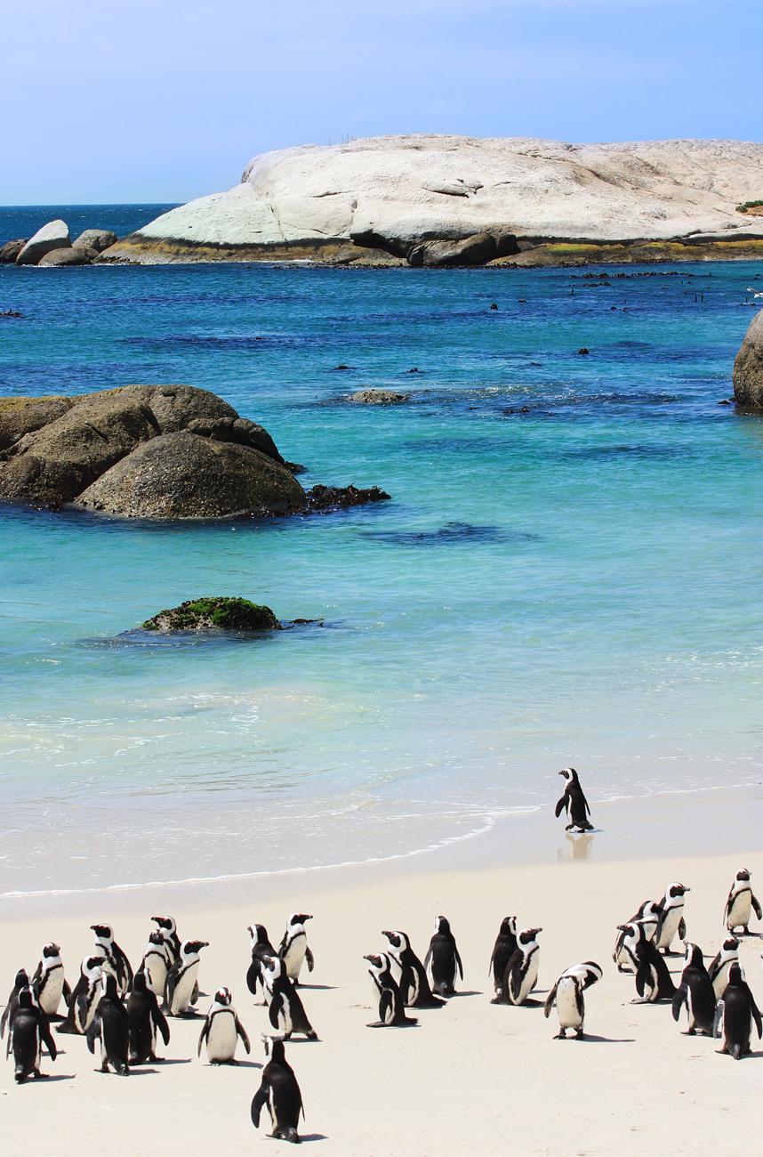 Pingüinos en la Playa