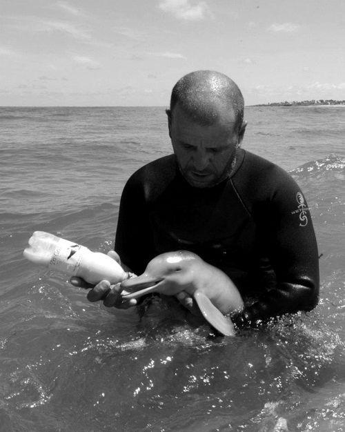 Delfín Bebe