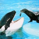 orca y foca