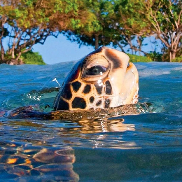 Datos Interesantes de las Tortugas Marinas