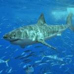 tiburon blanco|animales acuaticos