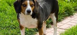 El perro una mascota sensacional