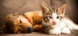 Tratar con homeopatía el estrés en animales