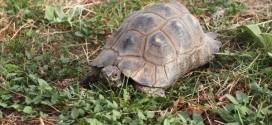 7 datos curiosos de las tortugas terrestres