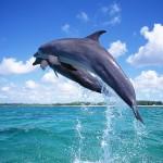 delfin-saltando